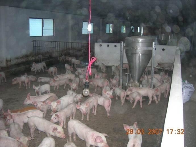 thông gió làm mát trong chăn nuôi 13