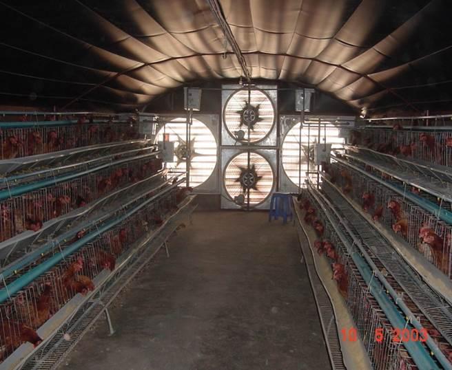 thông gió làm mát trong chăn nuôi 15