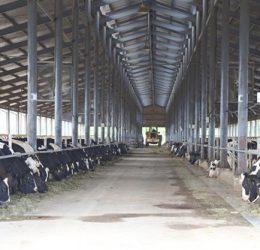 Hệ thống thông gió làm mát trong chăn nuôi